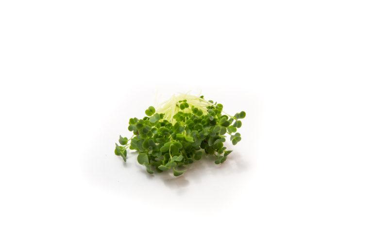 Brokolice - trs