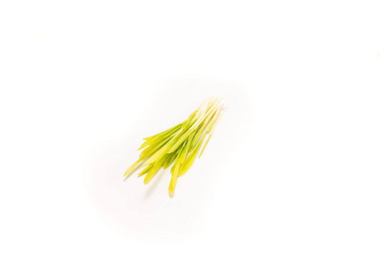 Kukuřice - trs